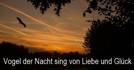 Songtext Vogel der Nacht von Stephan Remmler